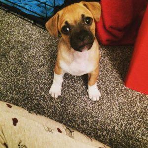 Jug-Pup-Curious