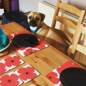 jeff-jug-dinner-table