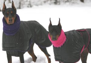 Best Dog Coats For Winter 2019 Uk Warm Coats For The Cold Jugdog