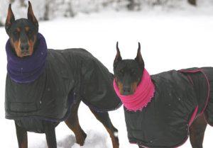 Best Dog Coats For Winter 2019 Uk Warm Coats For The Cold Jugdog