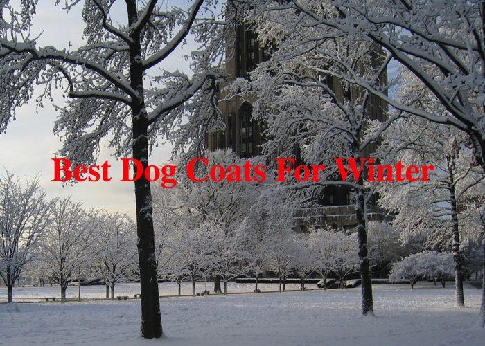 best-dog-coats-for-winter