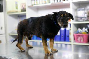 paracetamol-dose-for-dogs