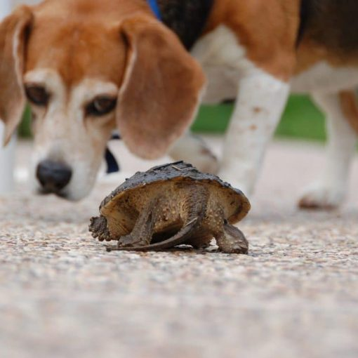 Dog and Tortoise