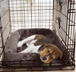 where is the best place to put a dog crate jug dog. Black Bedroom Furniture Sets. Home Design Ideas