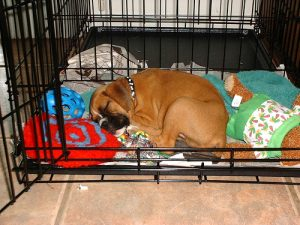 Good Size Dog Crate For Boxer