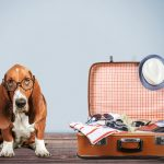 Dog Travelling Abroad