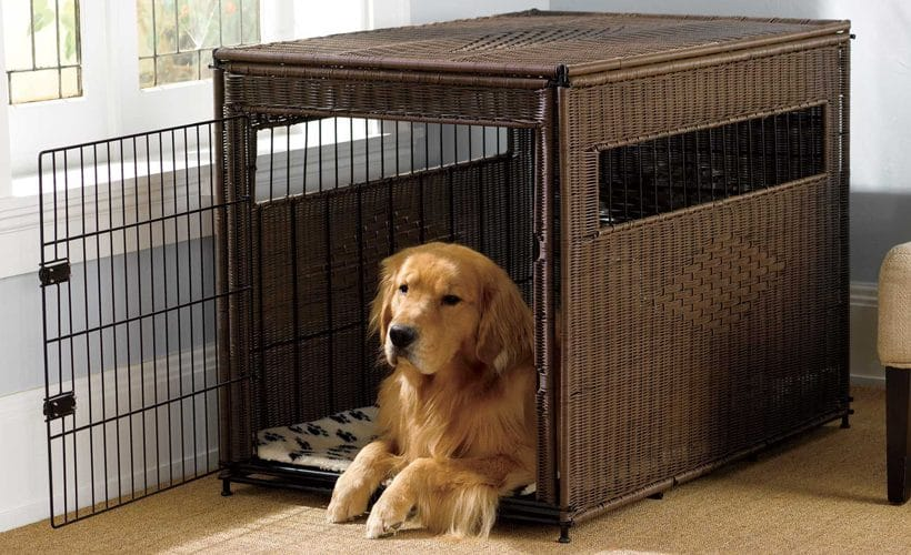 Image result for Top Traits to Consider When Purchasing a Dog Kennel