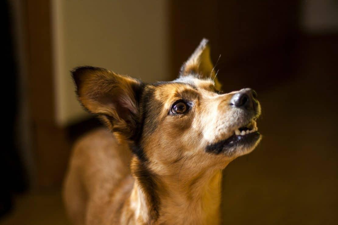 Best Dog Worming Treatment Uk