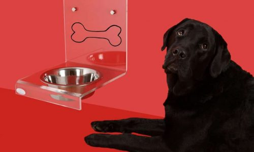 Dog with an automatic feeder