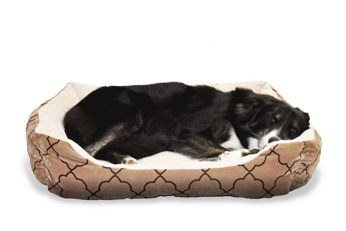 indestructible dog ballistics bed watch beds from youtube