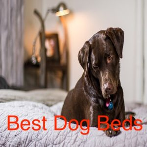 Best Dog Beds and Reviews