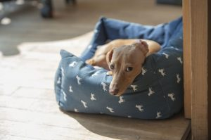 Dog Chilling on a Blue Bed