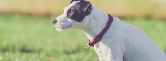 Best Dog Tracker