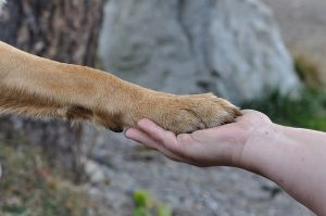 what does it mean when a dog puts its paw on you