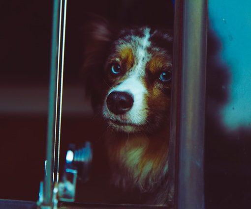 A dog on a bus