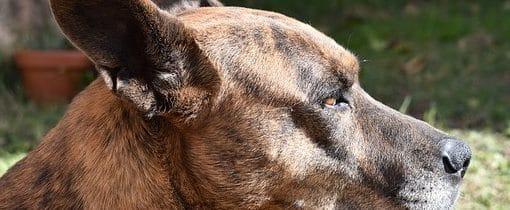 Dog Skin Itching