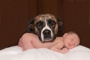When can my dog play with a baby
