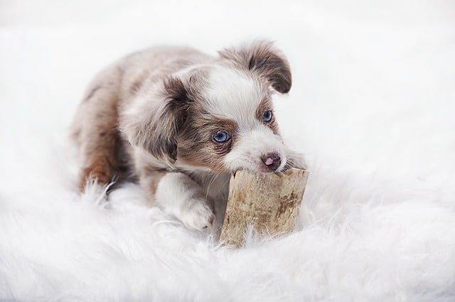 Best Puppy Toys