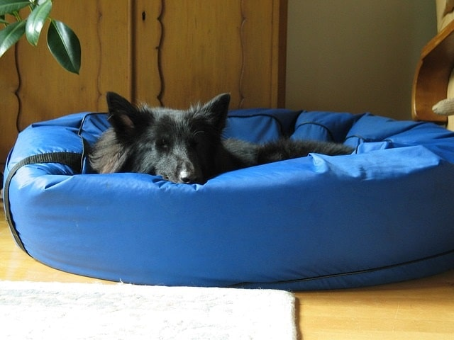 Waterproof Dog Beds