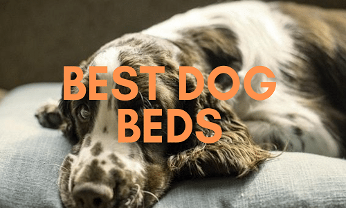best dog beds uk