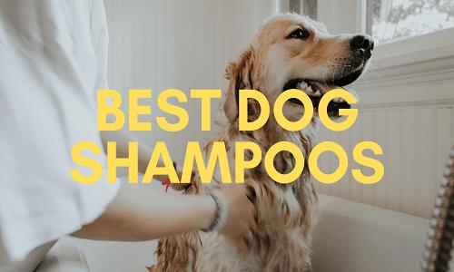 best dog shampoo uk