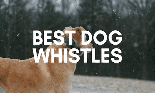best dog whistles uk