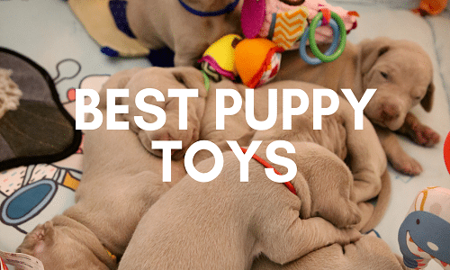 best puppy toys uk