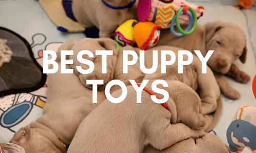 best puppy toys uk