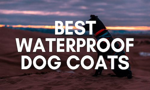 best waterproof dog coats