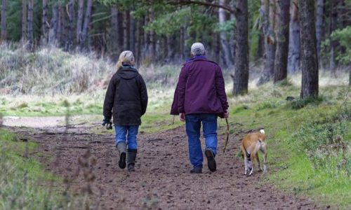 off the lead dog walks