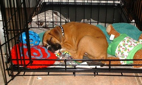 what to put in a dog crate