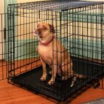 where is the best place to put a dog crate