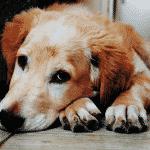 Get rid of dog urine smell