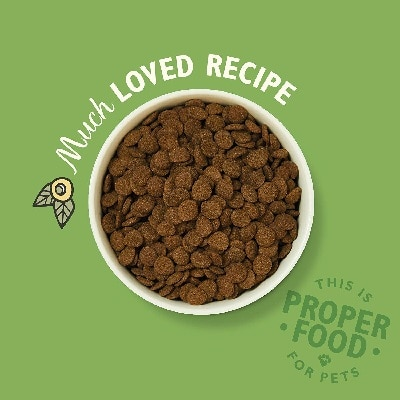 Best Dry Dog Food Reviewed
