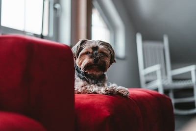 Hacks For Removing Dog Hair From Your Furniture Floors