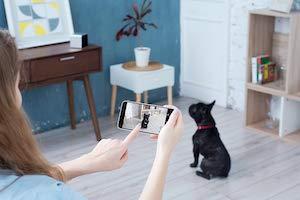 Petcube camera 3