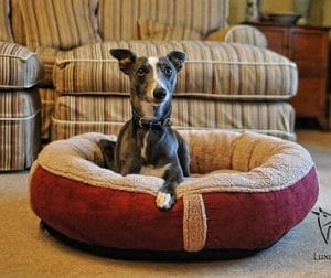 Wolfybeds Luxury Dog Bed 1