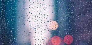 do dogs like rain