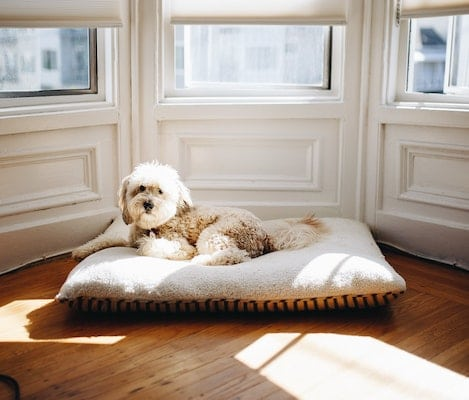 Best Hypoallergenic Dog Bed
