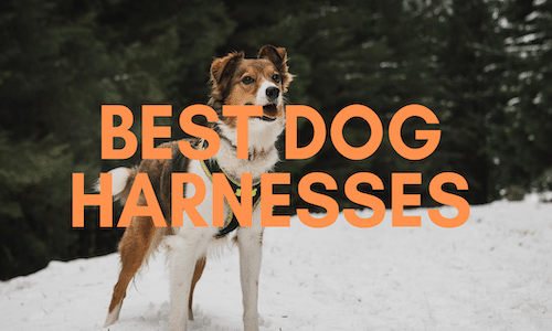 best dog harness uk
