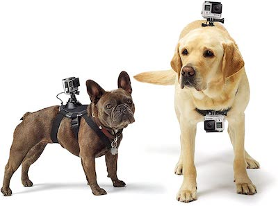 GoPro Fetch camera harness for dogs