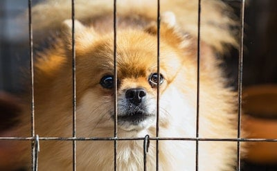 how to get a dog to stop crying in his crate