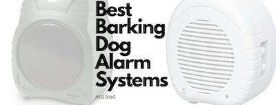 Best Barking Dog Alarm Systems