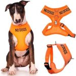NO-DOGS-orange-vest