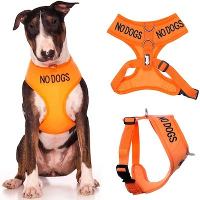 NO-DOGS-orange-vest