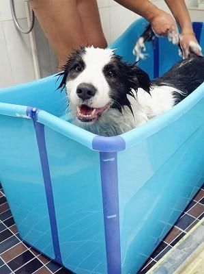 WWLONG Summer Foldable Pet Dog Pool