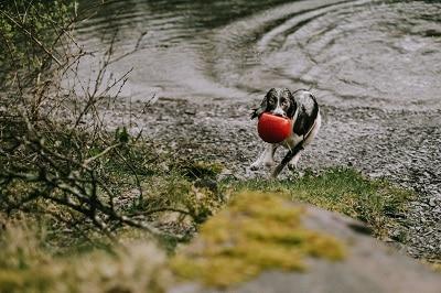 a wet dog