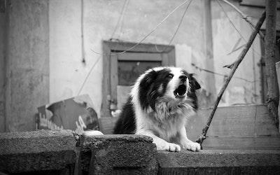 barking dog alarm system