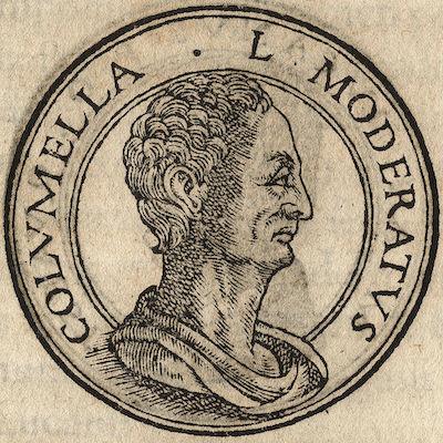 Columella Portrait