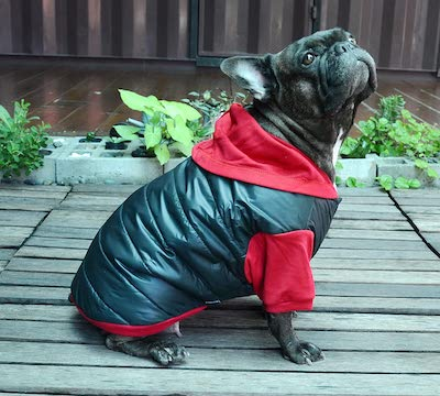 Doggydolly Winter Dog coat for Pugs